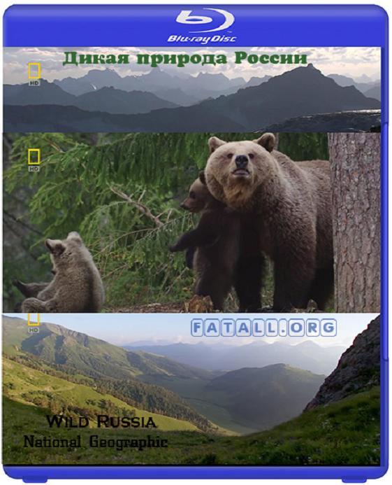 Дивата Русия – Тайната гора